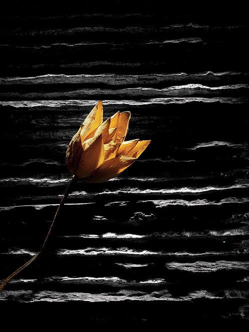 "Still Life, Archival Pigment Print, 9""x12"", Aditya Arya"