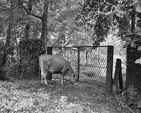 Ramu Aravindan_Kerala Landscape series-0