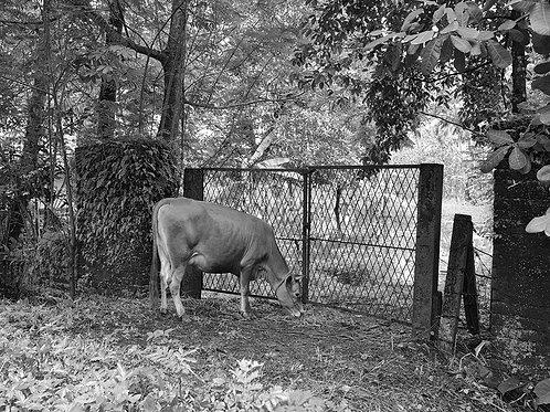 "Kerala Landscape 05, Archival Pigment Print, 12""x10"", Ramu Aravindan"
