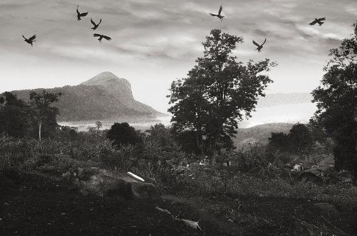 Jungle Crows, Parambikulam 1986
