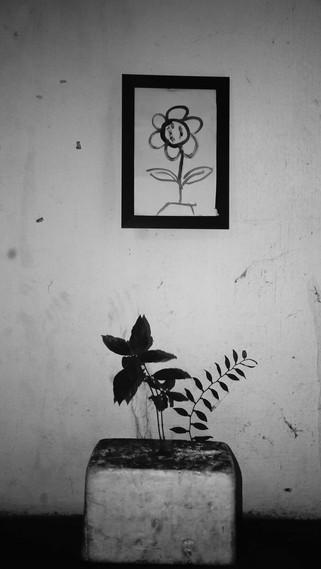 Flowering period