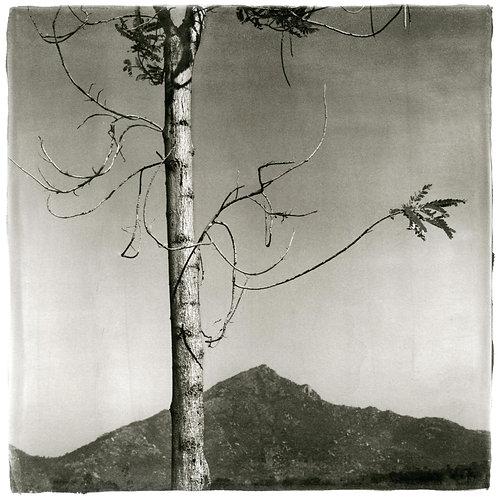 "Around the Hill, Palladium Print, 15""x19"", Thierry Cardon"