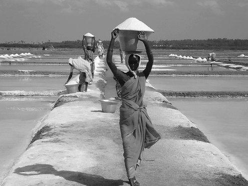 Salt farmers of the east coast, 2012