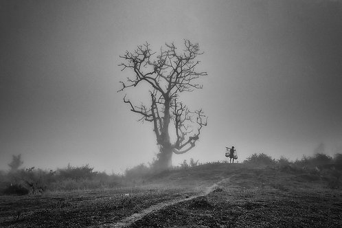 "The Lonely Tree, Archival Pigment Print, 12""x8"", Padmanabhan"