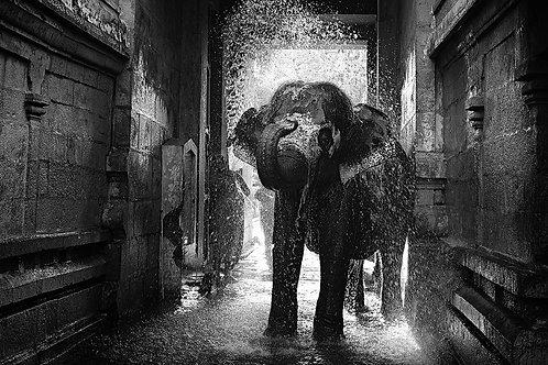 "Temple Elephant Taking Bath, Archival Pigment Print, 12""x8"", R.Prasana Venkatesh"