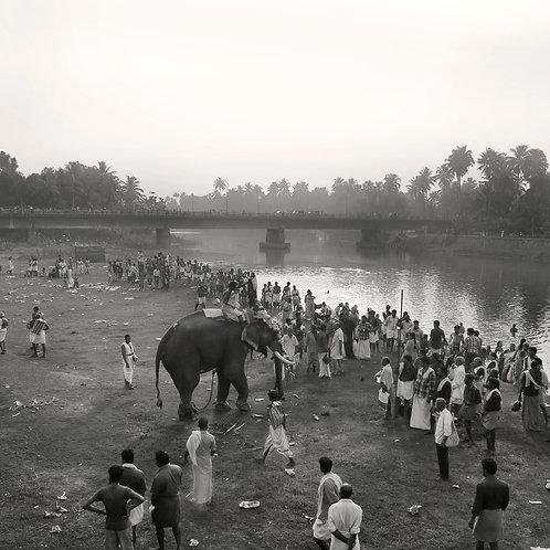 Temple Elephants, Arattukadavu 2012