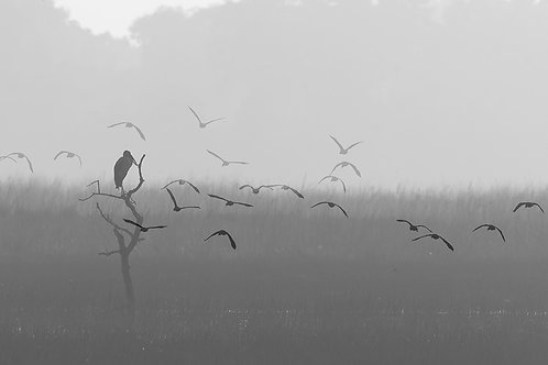"""Morning Vibes from a Wetland, Archival Pigment Print, 12""""x8"""", Shabeer Thurakkal"""