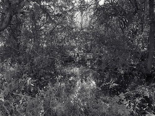 "Tamil Nadu Landscape 12, Archival Pigment Print, 12""x10"", Ramu Aravindan"