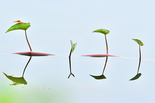 """The symmetrical reflection in water, 12""""x8"""", Shabeer Thurakkal"""