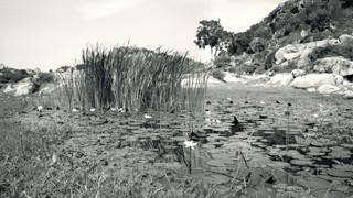 Holenarsipur