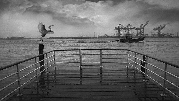 Monsoon Wind, 2006