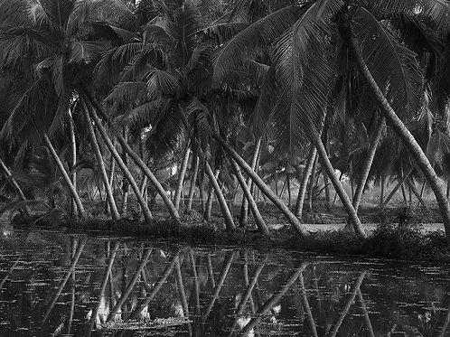 "Morning Walk, Archival Pigment Print, 12""x8"", Ramesh Varma, 2015-2017"