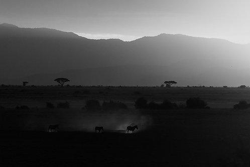 "Zebras in the evening, Archival Pigment Print, 12""x8"", Shabeer Thurakkal"