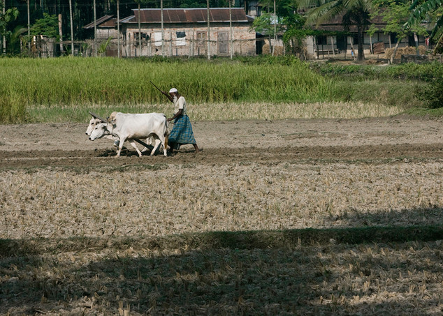 Farming in borderland Assam
