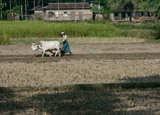 Farming in borderland Assam