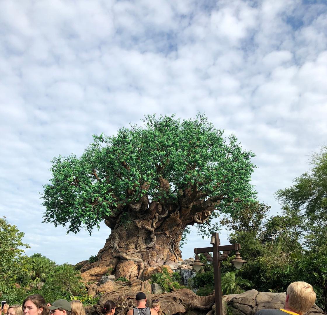 Disney & Universal Studios