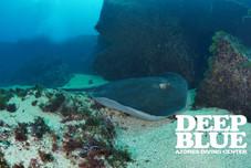 Deep Blue Azores Diving Center