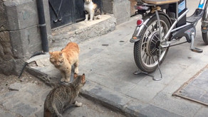 Taking a walk along the streets of Old Damascus | Early May of 2020