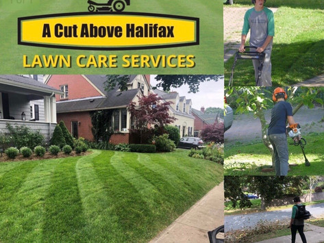 Insider Interview : A Cut Above Lawn care