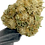 Thumbnail: Golden State Hemp CBG 1.0 Hemp Clones | Feminized