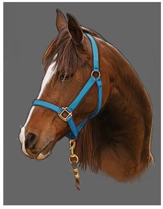 horse portrait final-ish ;o)