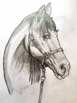 Horse portrait sketch