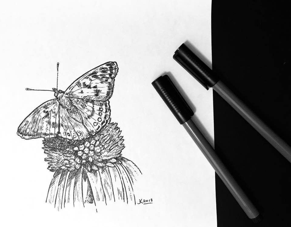 sunday nights American Lady, drawn from the back yard