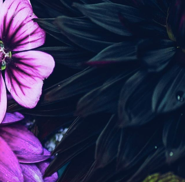 Stunning Dahlia's By Bumblebee Flower Farm