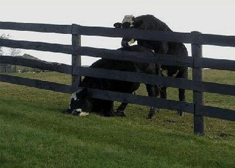 animal fencing .jpg