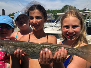 4th of July Weakfish