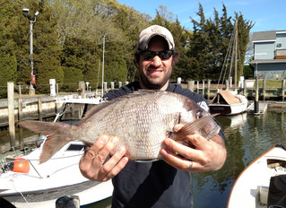 May 1, 2017 Porgy Opener