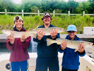 Two Trip Weakfish Limit
