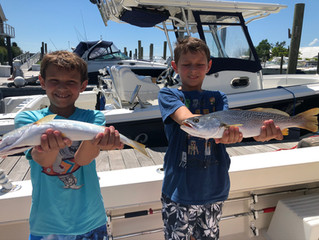 Selkin Charter Weakfish Success