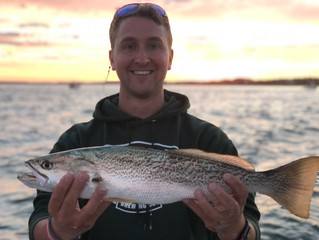First Weakfish