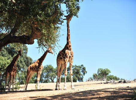 VLOG: uma aventura a dois no Badoca Safari Park