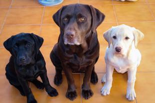 Uma família feliz (e muito, muito fofinha)
