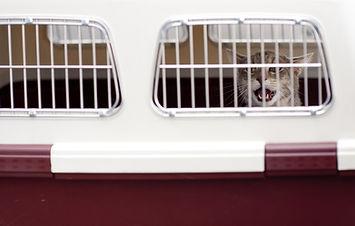 Pet Shipping