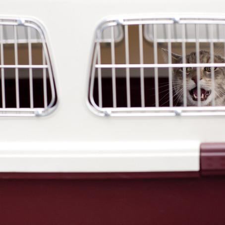 Kedi/Köpek ile seyahat etmek