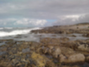 (C)CIIMAR - Praia da memória.jpg