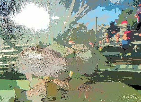 Urban Fish - 2183