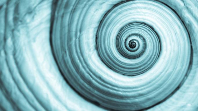 Spiral%2520shell%25204_edited_edited.jpg