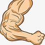 White muscle building.png