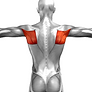 Rohymboids middle upper back exercise pl