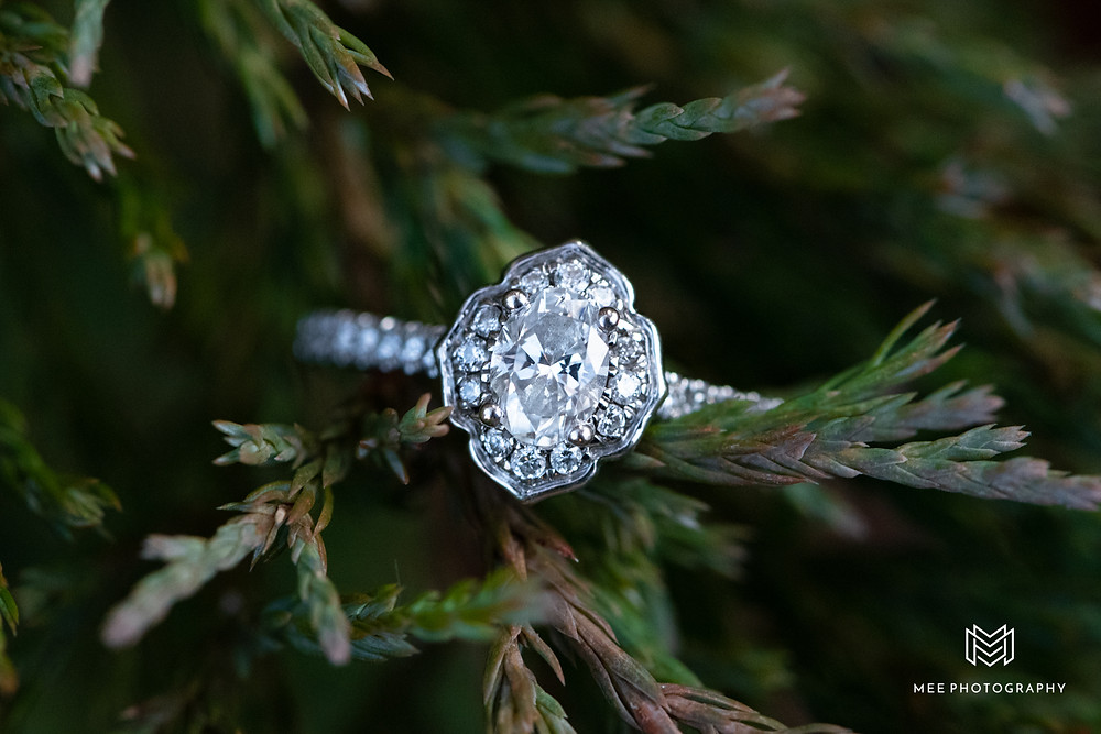 Diamond engagement ring on evergreen bush in Pittsburgh