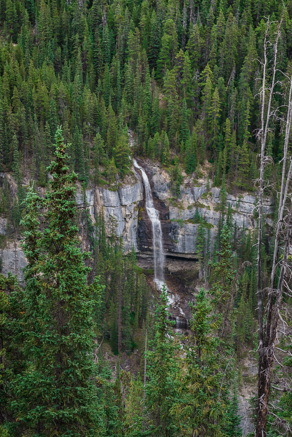 A waterfall along the Icefields Parkway in Alberta Canada