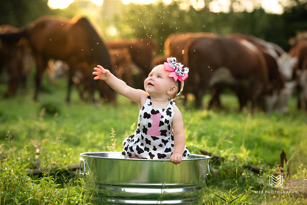 One year old girl in an aluminum bucket in a cow pasture with cows in the background