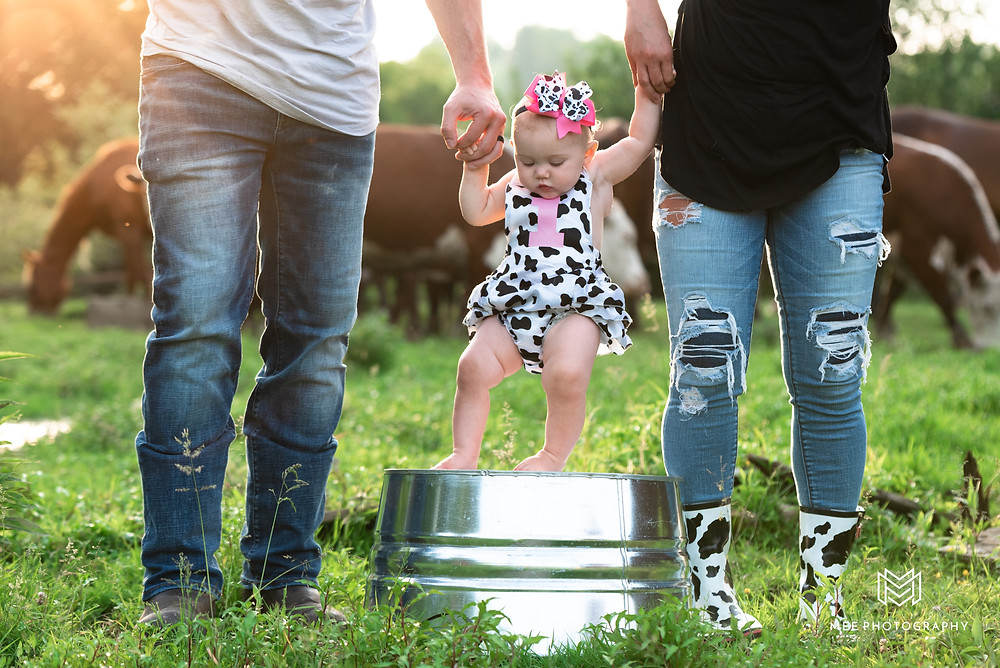 One year old girl wearing a cow outfit standing between her parents legs