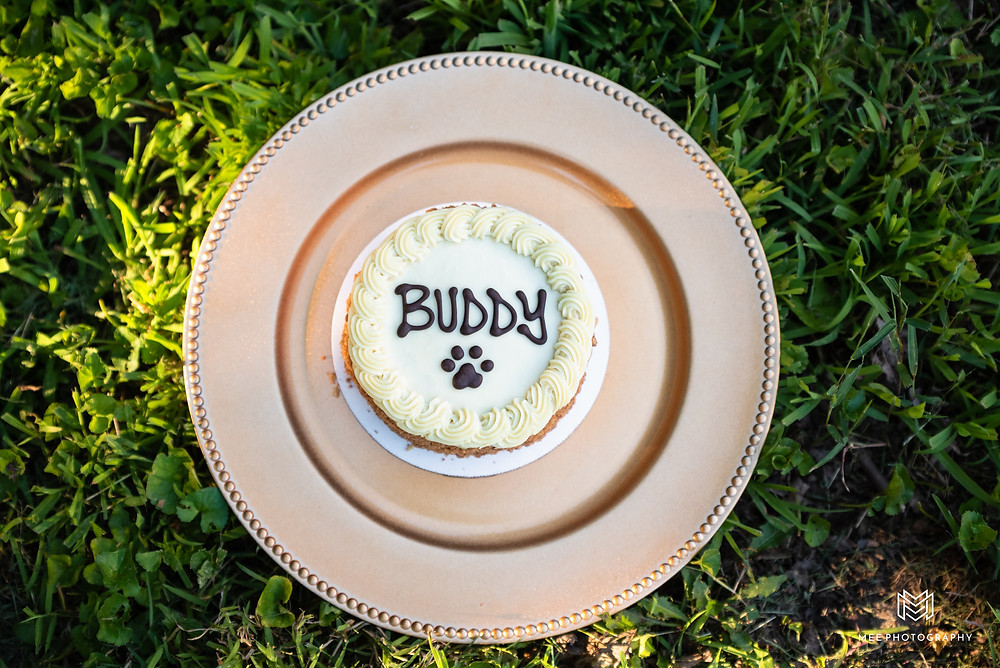 Dog cake smash cake  that says Buddy on a plate in the grass