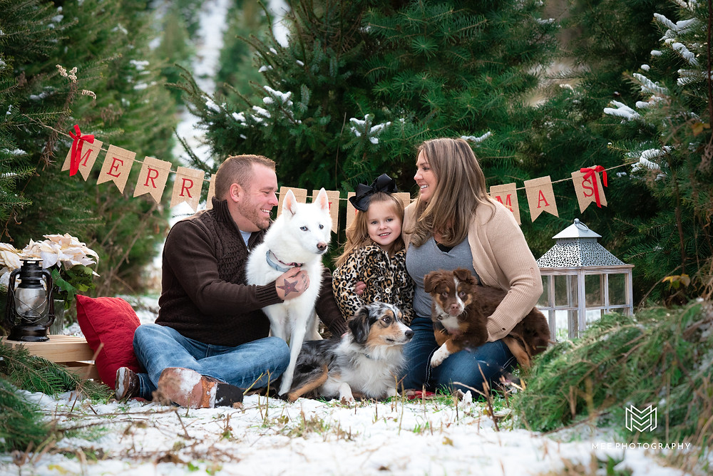 Family sitting on a blanket in the snow with their three dogs during their Christmas tree farm photography session.
