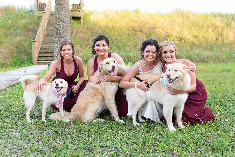 Puppies in wedding photos